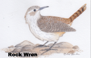 Illustration of a rock wren on a rock